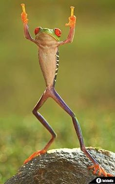 Awesomely Timed Photograph - This Frog Should Be An Umpire!