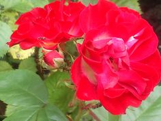 little roses, made in my own garden