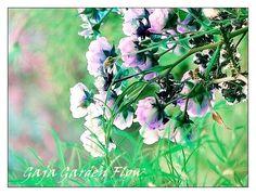 Gaja Garden Dreams