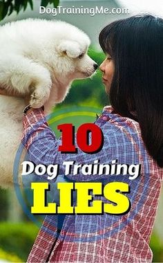Here are 10 dog training lies you've probably never heard before. We expose the truth about what you need to know before you start training your dog! Click through for our article to find out what they are.