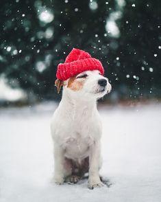 Cutest Doggo Enjoying the winter snowy weather. Cutest JRT puppy wearing a red beanie. Snow Winter Wonderland Dog photography ideas.