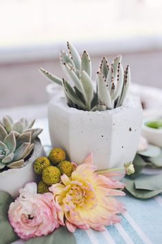 succulents for spring