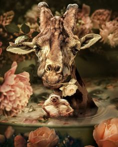 The Wonderful World Of Fantasy And Feeling Of The Artist Marcel Van Luit World Of Fantasy, Fantasy Art, Animal Paintings, Animal Drawings, Animals Beautiful, Cute Animals, Spiritual Animal, Nature Artists, Animal Wallpaper
