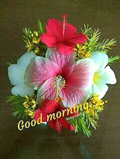 Good Morning Images For Whatsapp Good Morning Wishes Gif, Good Morning Thursday, Morning Qoutes, Good Morning Images Hd, Good Morning Messages, Good Morning Greetings, Gd Morning, Morning Pics, Good Morning Flowers Pictures