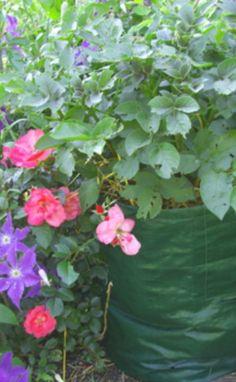 Pot those veggies! Container vegetable gardening