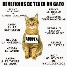 Descubre esto y más de los beneficios que tiene tener una mascota en casa... http://www.1001consejos.com/beneficios-de-tener-una-mascota/