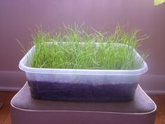 Hamster Heaven Indoor Grass