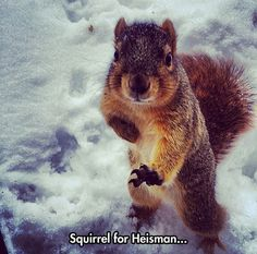 Squirrel for...