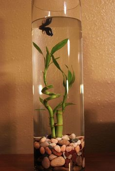 Betta and lucky bamboo is a must! Place near the front door to bring positive chi in the home Betta Aquarium, Planted Aquarium, Diy Aquarium, Nano Aquarium, Glass Aquarium, Aquarium Ideas, Betta Tank, Aquarium Design, Indoor Water Garden
