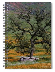 """This x spiral notebook features the artwork """"Standing in Painted Beauty"""" by Debby Pueschel on the cover and includes 120 lined pages for your notes and greatest thoughts. Notebooks For Sale, Spiral Notebooks, Lined Page, Fine Art America, Notes, Amazing, Outdoor Decor, Artist, Artwork"""