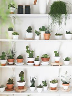 Best indoor plants Plant decor Plants Indoor cactus Indoor plants Trendy plants How to Grow More Succulents Without Spending a Dime