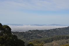 Views from Seaview Trail, Tilden Park, Berkeley by askpang, via Flickr