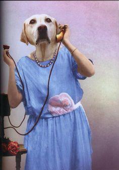 Royal Animals, Animals And Pets, Funny Animals, Cute Animals, Funny Animal Pictures, Dog Pictures, Human Zoo, Zoo Art, Dog Artwork