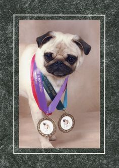 Pacific Pug Rescue Is Holding A Raffle For A New Ipad A Visa