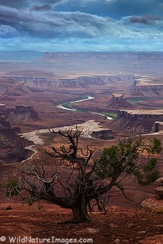Green River Overlook, Canyonlands National Park, Utah -- have been right here!!