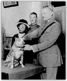 Meet America's first war dog, a stray Pit Bull/Terrier mix, named Stubby. He became Sgt. Stubby, the most decorated war dog of World War I and the only dog to be promoted to sergeant through combat. Nagasaki, Hiroshima, Military Working Dogs, Military Dogs, Police Dogs, Fukushima, Bull Terrier Mix, Pitbull Terrier, Sergeant Stubby