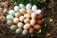 Chicken Eggs - once you have your own range fed chicken eggs you'll never eat grocery store eggs again! Fresh Chicken, Chicken Eggs, Chickens And Roosters, Pet Chickens, Chickens Backyard, Chicken Breeds, Mini Farm, Raising Chickens, Poultry