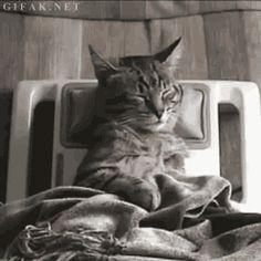 Even cats love a good massage (gif)