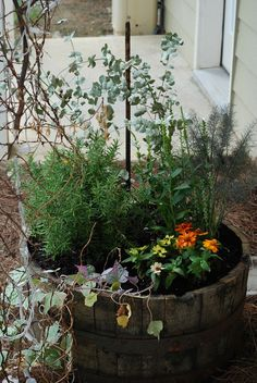 I love Anna's idea for her herbs and flowers at her apartment.  She found an original Jack Daniels whiskey barrel for $29 at Southeastern Salvage, and Tony did his magic with the dirt.  Hopefully the sun and rain will cooperate and it will be a long-time pretty patio apartment addition.