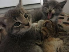 15 Incredible Cat Photobombs