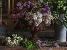 Marie Claire Maison fa sbocciare i capolavori dell'arte con un evento Fuoriorticola: protagonisti delle vetrine di via Fiori Chiari i migliori flower designer