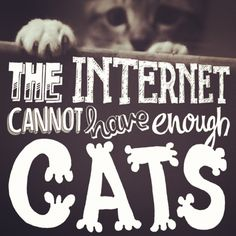 The internet cannot have enough cats