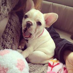 Brie baby! #frenchie #puppy #frenchbulldog