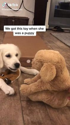 They are such sweet dogs Cute Funny Dogs, Cute Funny Animals, Cute Animal Videos, Cute Animal Pictures, Dog Pictures, Chien Golden Retriever, Funny Animal Jokes, Cute Stories, Funny Dog Videos