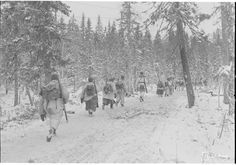 Finnish soldiers moving east of Kestenga towards the Murmansk railway at Loukhi through the arctic forest - Operation Silver Fox - Wikipedia The Republic, World War Two, Arctic, Ww2, Norway, Politics, History, Soldiers, Outdoor