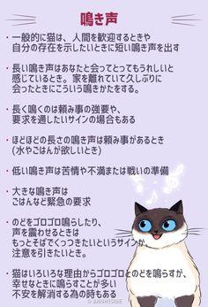「猫は雄弁。尻尾や仕草、鳴き声で多くを語る。「猫語」を理解するためのイラスト」の画像 : カラパイア Soft Kitty Warm Kitty, Cat Comics, Warrior Cats, Funny Cute, Neko, Animals And Pets, Dogs, Life, Cute Kittens