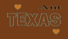 texas and my name