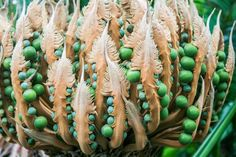 Cycas Seeds Photo by Tracy John Ellis -- National Geographic Your Shot Weird Plants, Unique Plants, Rare Plants, Organic Ceramics, Seed Pods, Patterns In Nature, Natural Forms, Flower Seeds, Planting Seeds