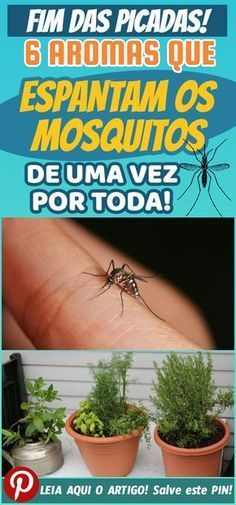 Mata Mosquito, Natural Lifestyle, Plantar, Sustainable Design, How To Know, Interior Design Living Room, Health And Wellness, Tips, Dengue