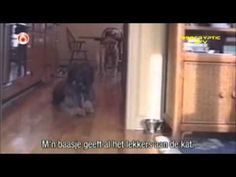 Funny Dogs Video Clips - Part 4