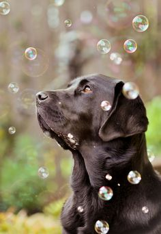 Lab with Bubbles