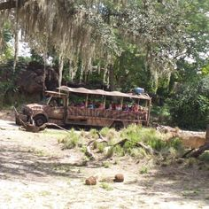 Disney's Animal Kingdom at Walt Disney World in Orlando, Florida, USA Florida Usa, Orlando Florida, Walt Disney World Orlando, Garden Bridge, Animal Kingdom, Things To Do, Outdoor Structures, Park, Blog