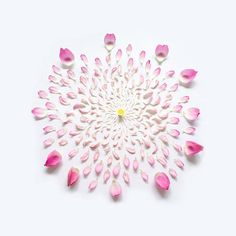 Exploded Flowers by photographer Fong Qi Wei