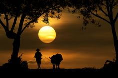 Spectacular Sunset Silhouette Photography - My Modern Metropolis
