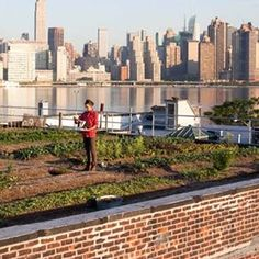 Sustainable Rooftop Agriculture Guide found on metrohippie.com