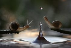 rain or shine, macro photographer vadim trunov captures the surprisingly adventurous lives of snails.