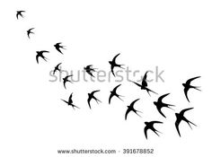 Swallow Stock Photos, Images, & Pictures | Shutterstock
