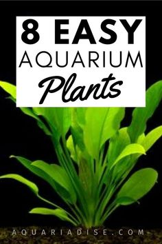8 Aquarium Plants that are easy to care for and perfect for every skill level from beginner to expert. They don't require extra lights, or specific water values. These hearty plants will survive the worst plant keepers! Aquarium Set, Live Aquarium Plants, Aquarium Design, Aquarium Fish Tank, Planted Aquarium, Freshwater Aquarium Plants, Tropical Freshwater Fish, Tropical Fish, Aquarium Maintenance