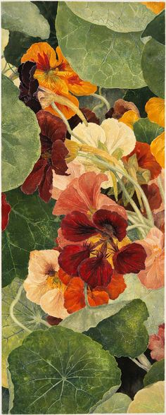 Cressida Campbell Nasturtiums, unique woodblock print, watercolour paint on stonehenge paper, 114 x 45 cm Art Floral, Motif Floral, Watercolour Painting, Watercolor Flowers, Encaustic Painting, Watercolors, Painting Prints, Guache, Decoupage Vintage