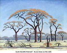 Acacia Trees on the Veld by Jacobus Hendrik Pierneef or Pierneef ( 1886 African Paintings, Tree Paintings, African Tree, Bonsai Art, South African Artists, Acacia, Tree Illustration, Art For Art Sake, Tree Art