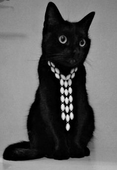 My black cat Rio wearing an IBERO necklace. Looks good, eh?