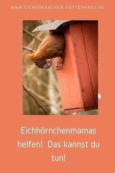 Eichhörnchenbabys brauchen ein sicheres Zuhause- in einem wetterfesten Kobel. Warum das wichtig ist, erfährst Du hier! Safety, Kawaii, First Aid, Ad Home