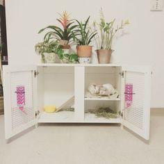 Indoor rabbit hutch: