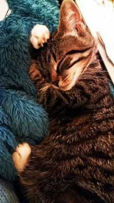 This is Namine our lovely girl. Katzen : This is Namine our lovely girl. Cute Baby Animals, Animals And Pets, Funny Animals, Animals Images, Cute Kittens, Tabby Kittens, Sphynx Cat, Pretty Cats, Beautiful Cats