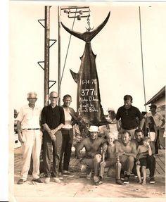 Big Rock Blue Marlin tournament    Morehead City NC  1971