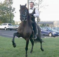 Gala of the Royal Horses ... http://www.fox45now.com/shared/news/features/morning/stories/wrgt_vid_826.shtml